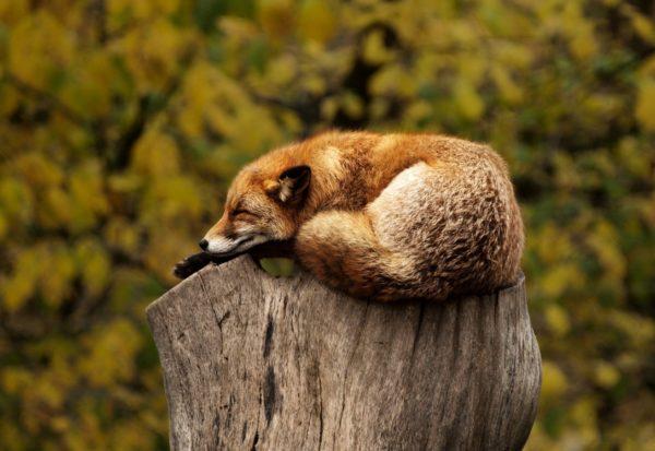 Slaapproblemen? Tips voor een betere nachtrust